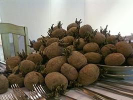 Aardappeldaters II
